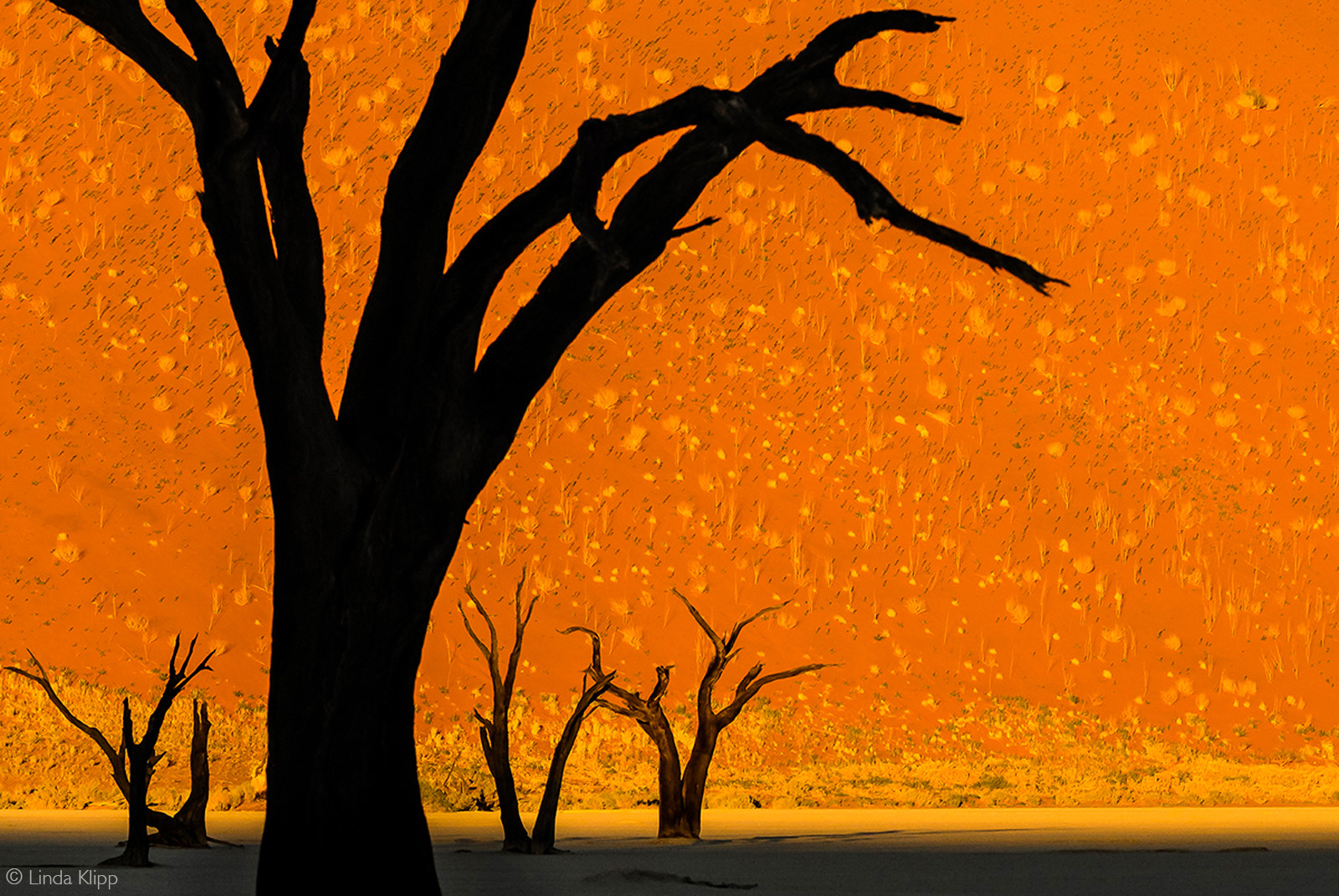 Dark silhouettes of dead trees against the light of sunset in Deadvlei, Namibia © Linda Klipp