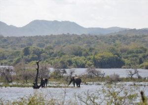 Elephants in Majete Wildlife Reserve, Malawi