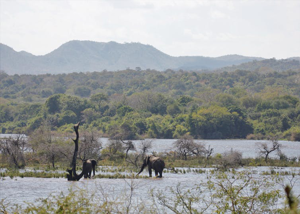 Elephants in Majete Wildlife Reserve, Malawi