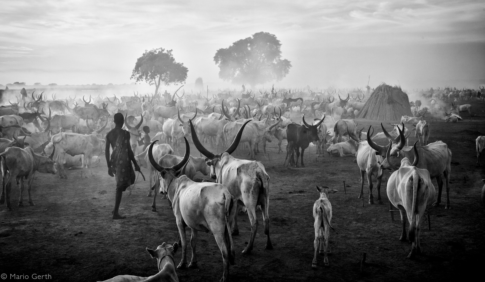 Mundari gather together in huge cattle camps where about 5,000 cows converge at night alongside the Nile River. South Sudan © Mario Gerth