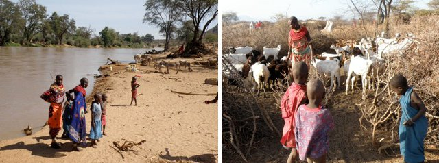 Maasai along the banks of a river and with their cattle
