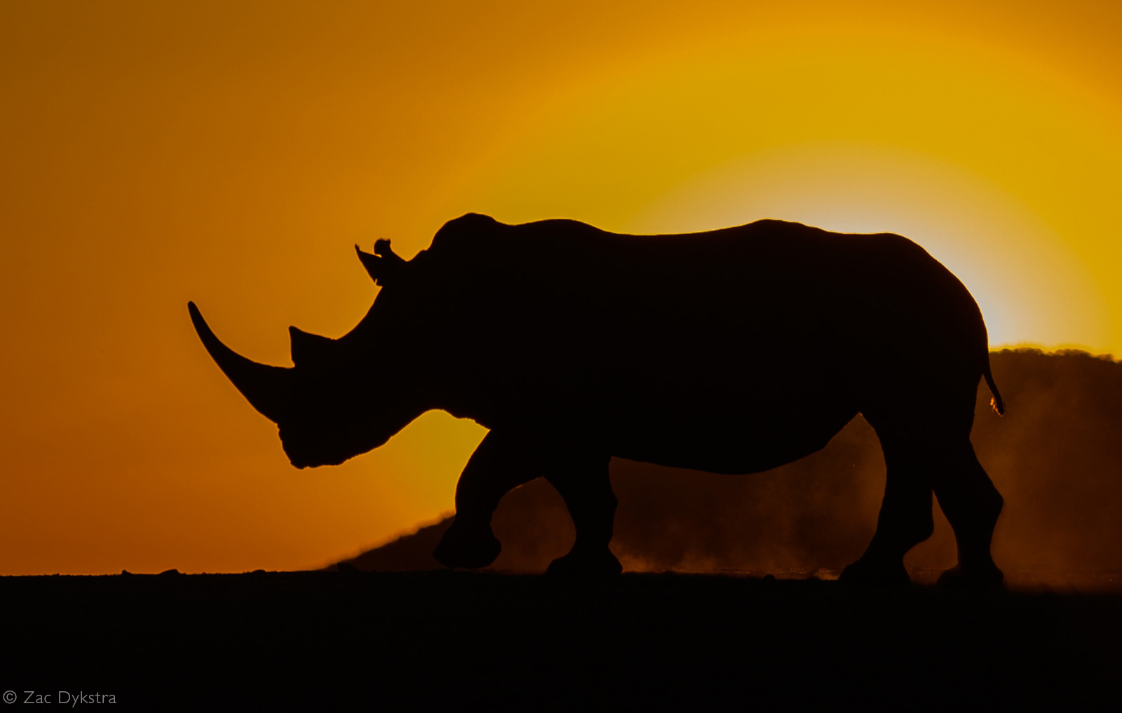 Rhino silhouette at sunset. Game reserve in South Africa © Zac Dykstra