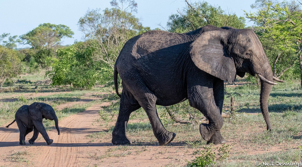 Elephant mother and calf, Greater Kruger, South Africa