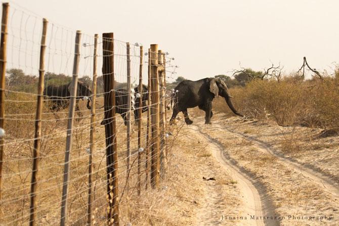 elephant-breaks-fence