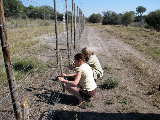 fixing-fence