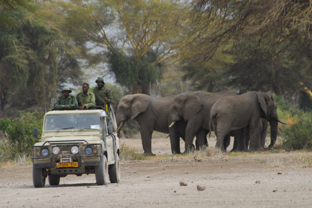 Rangers in a vehicle with elephant herd in background