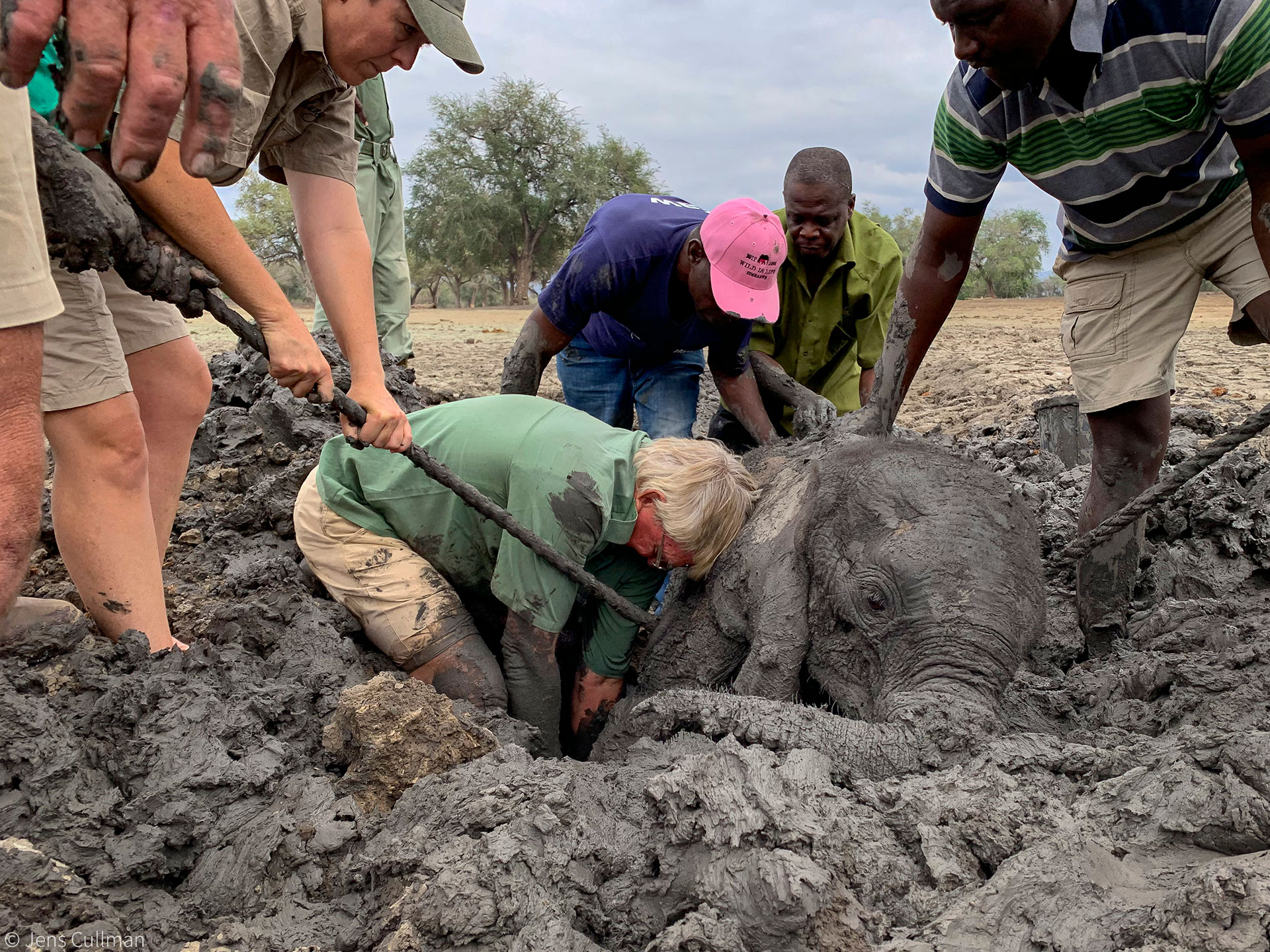 Baby elephants rescued