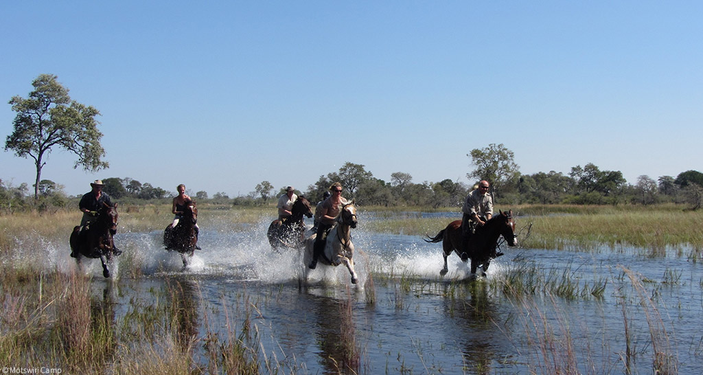Gallop through the watery plains of the Okavango Delta, Botswana