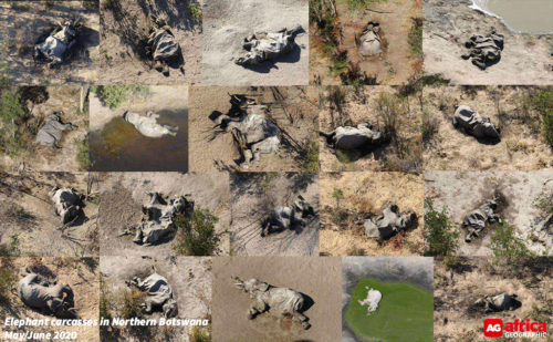 Botswana elephants dying
