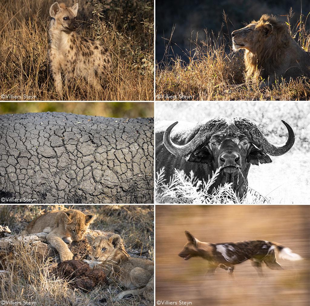 COVID-19 safari
