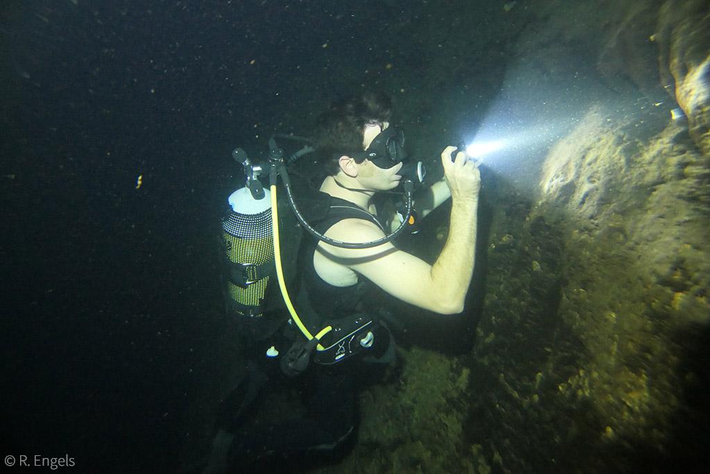 blind cave catfish