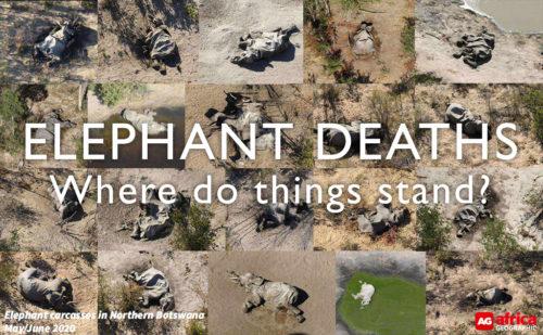 elephants dying
