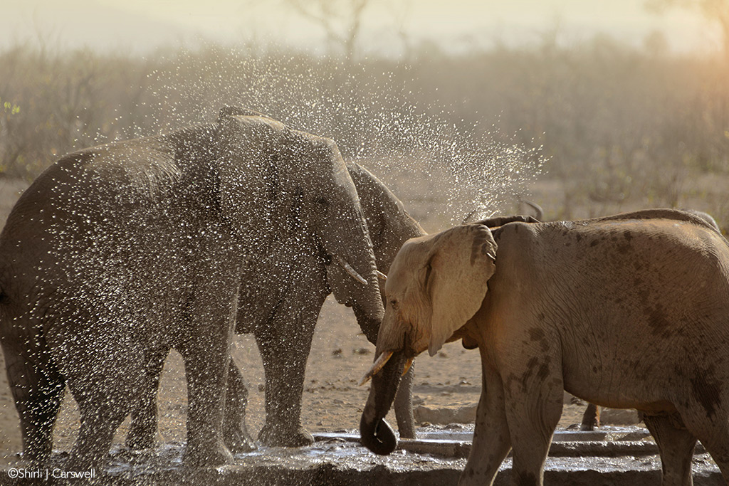 kruger waterhole problems