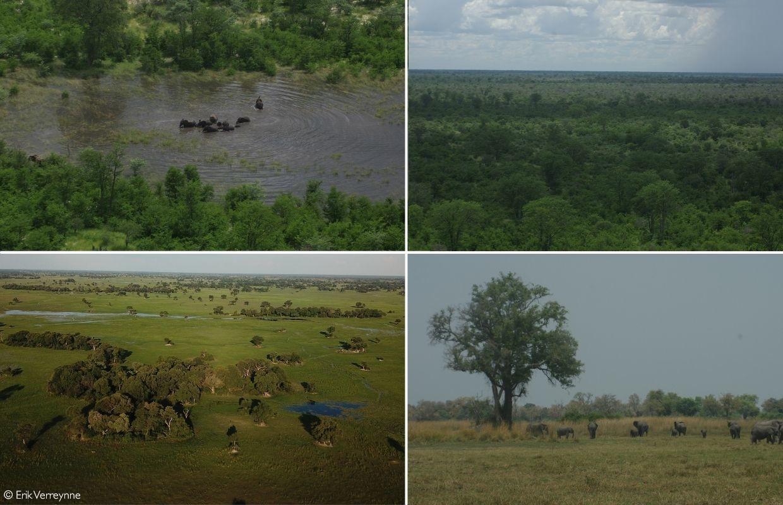 fences stop elephant migration