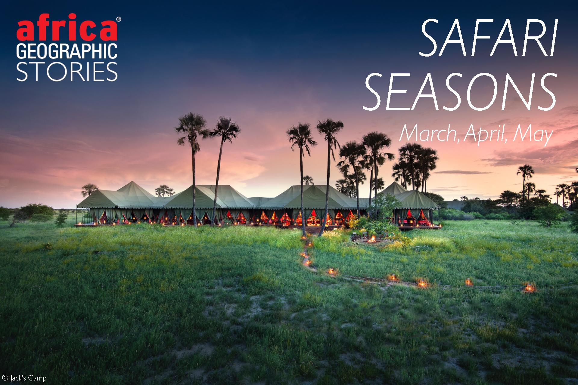 safari season