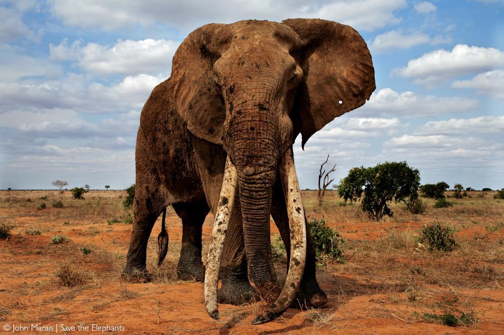 Elephant range