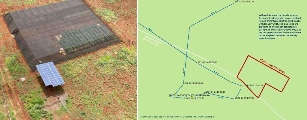 avocado farm in the Amboseli region