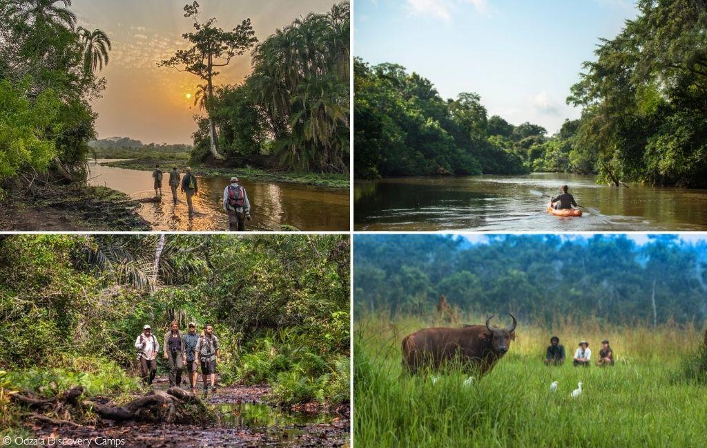 Odzala-Kokoua National Park