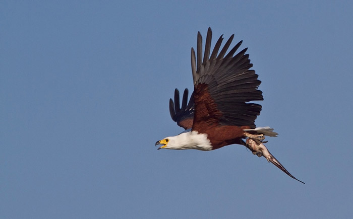 Fish-Eagle-and-Barbel-web