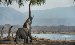 mana-pools-photo-of-elephant